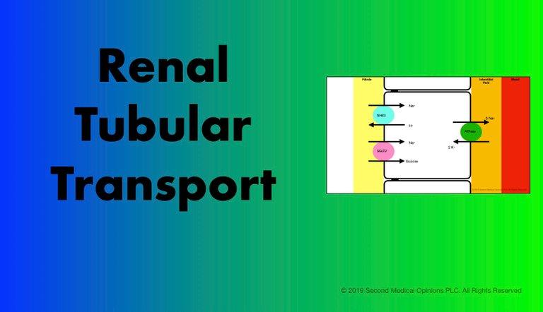 Picture Steemit Renal Tubular Transport.jpg