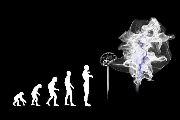 evolution-3885331_1920.jpg