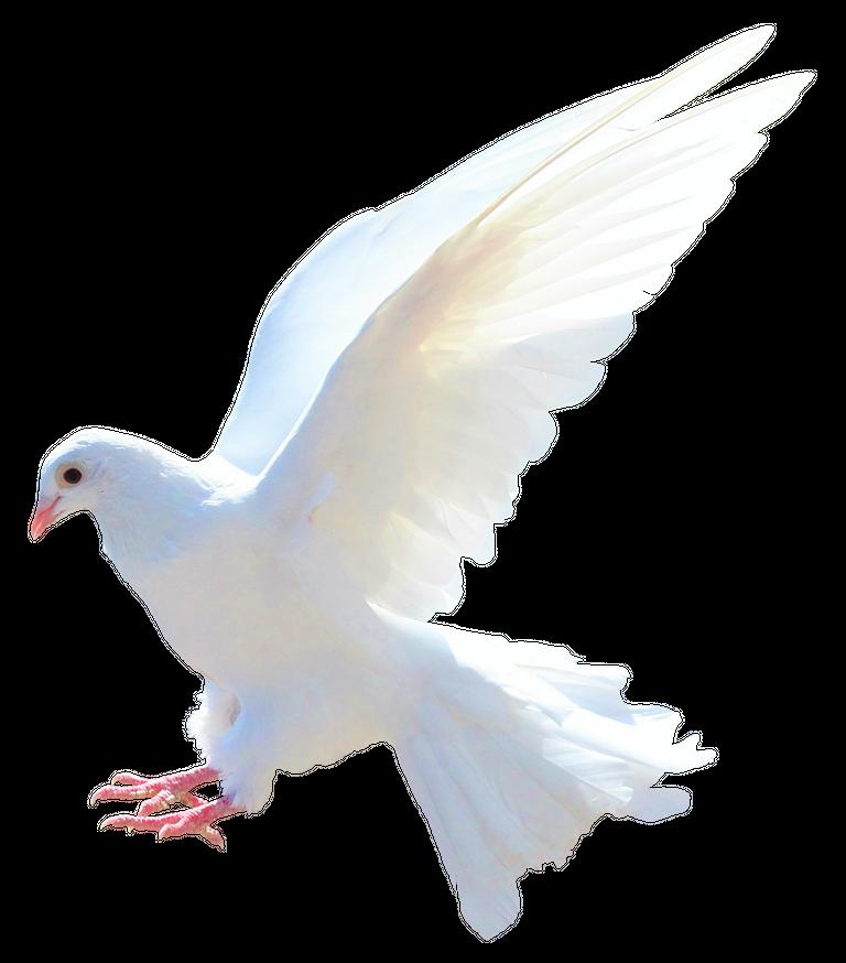 purepng.com-dovebirdsflyanimals-631522936392nfpfq.png
