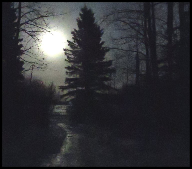 large full moon rising at head of lane by big spruce tree.JPG