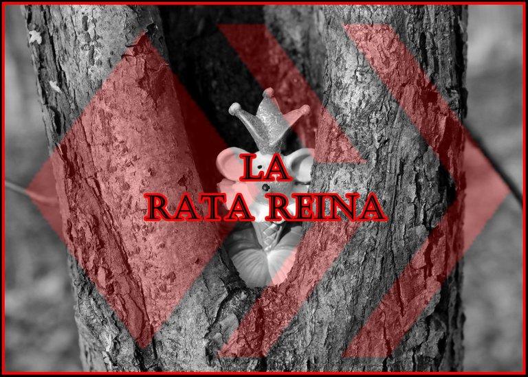 rat-1034442_1920.jpg