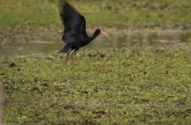 13.-Esteros-del-Iberà-24-bigua-o-cormoran-negro.jpg