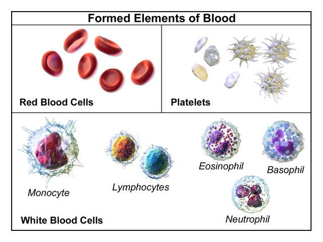 Illustration depicting formed elements of blood