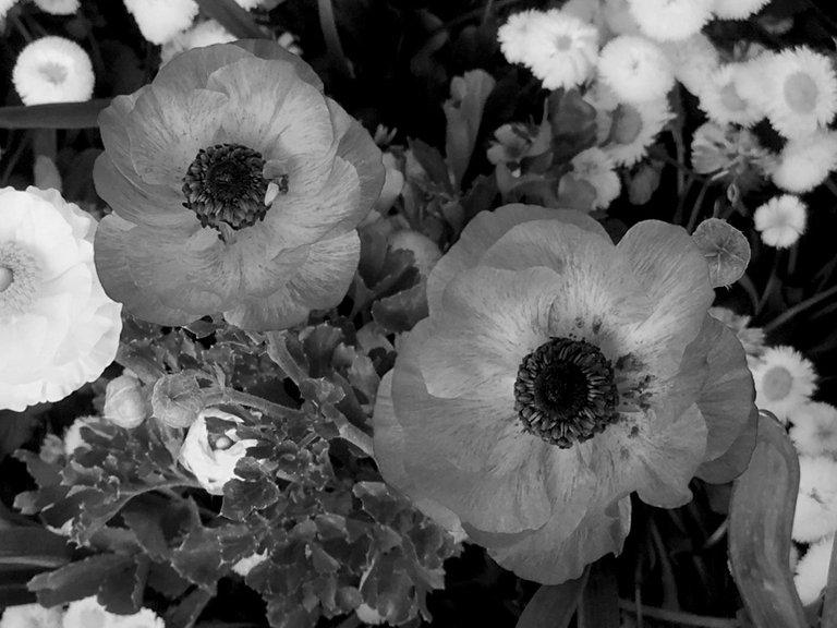 monomad floriade6.jpg