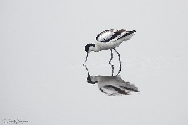 Birds first edit7389PP.jpg
