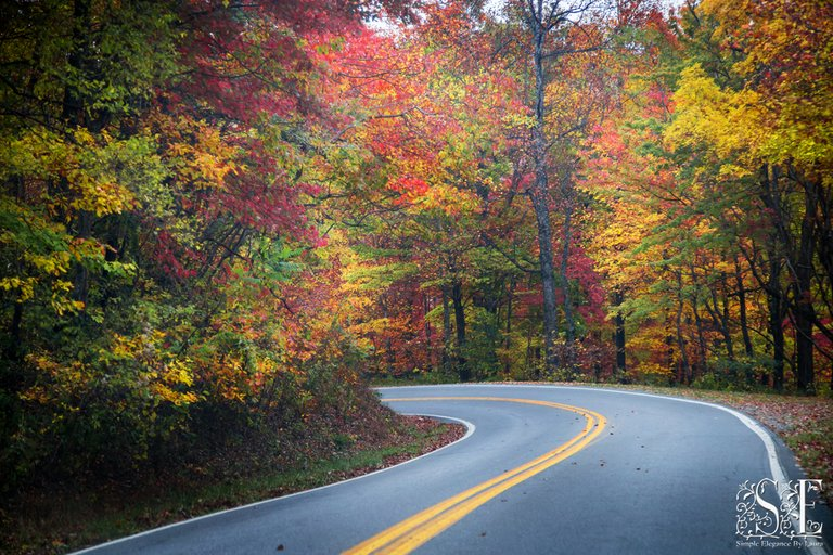 Blueridge Parkway 12.jpg
