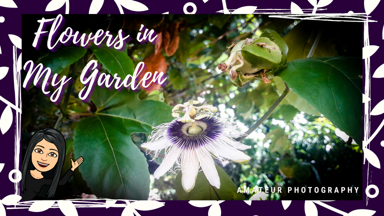 Flowers in My Garden.png