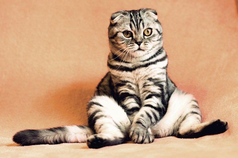 cat2934720_1280.jpg
