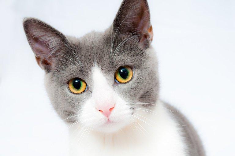 cat1151519_1280.jpg