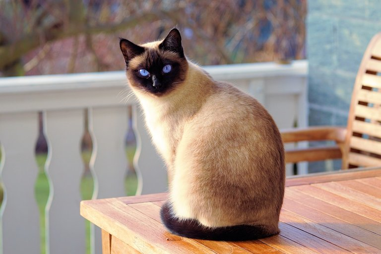 cat2068462_1280.jpg