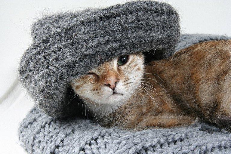 cat2201460_1280.jpg