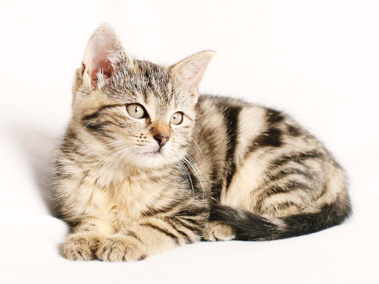 cat1192026_1280.jpg