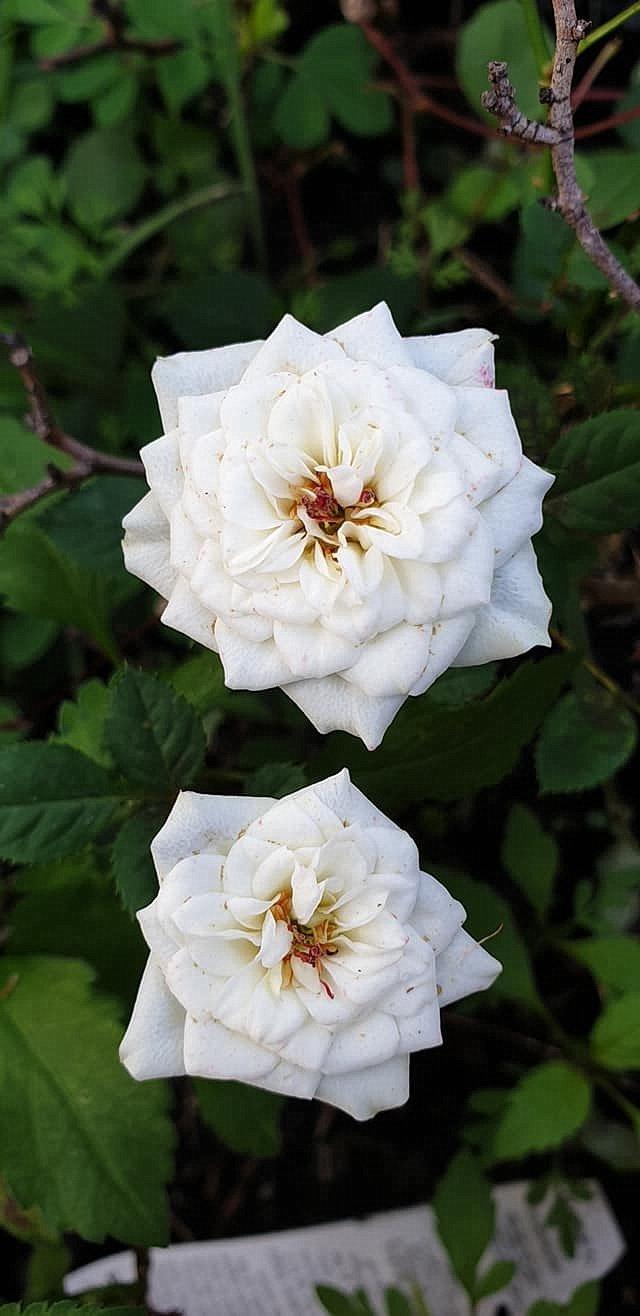 flower_34u.jpg