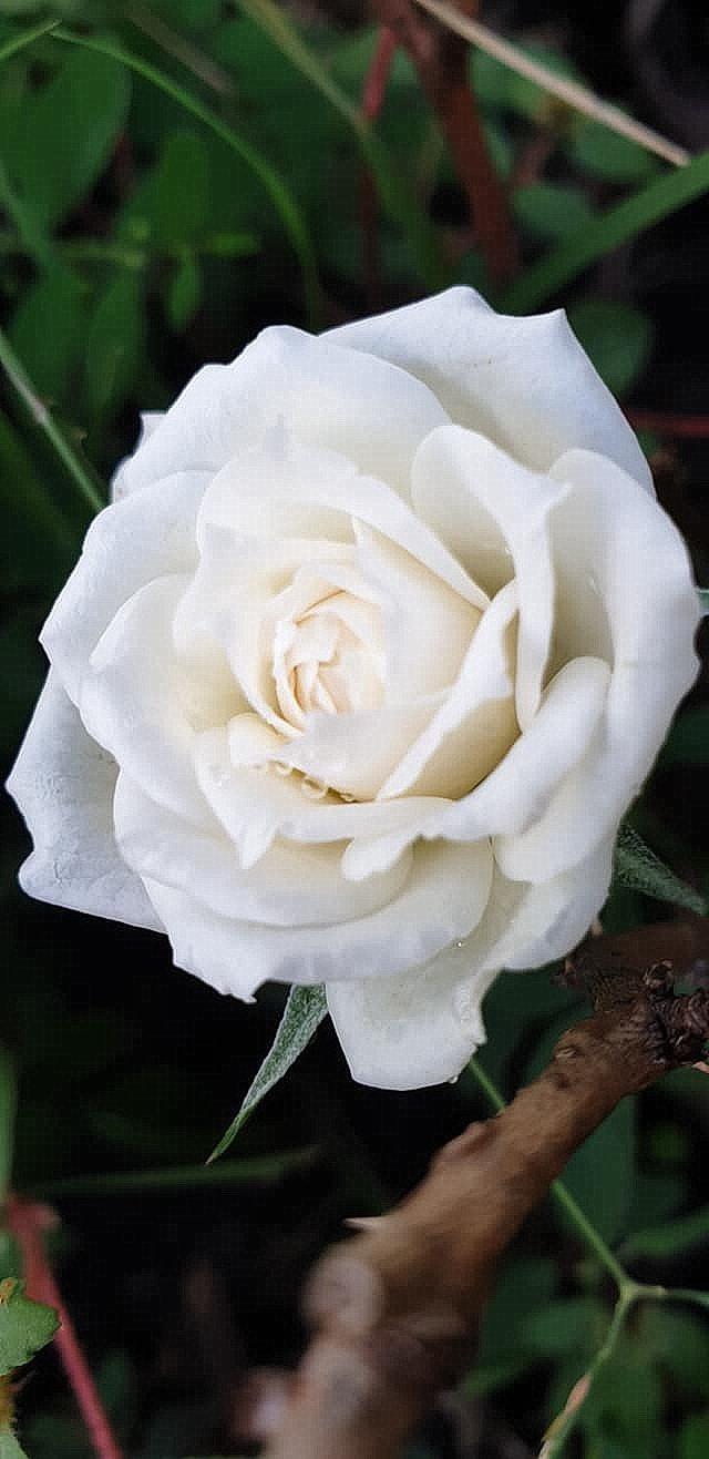 flower_27u.jpg