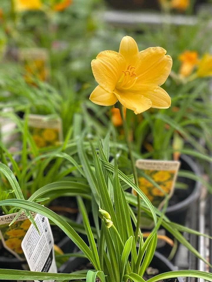 flower_23u.jpg