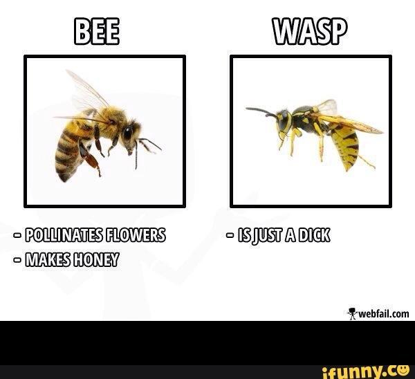 bees_wasps.jpg