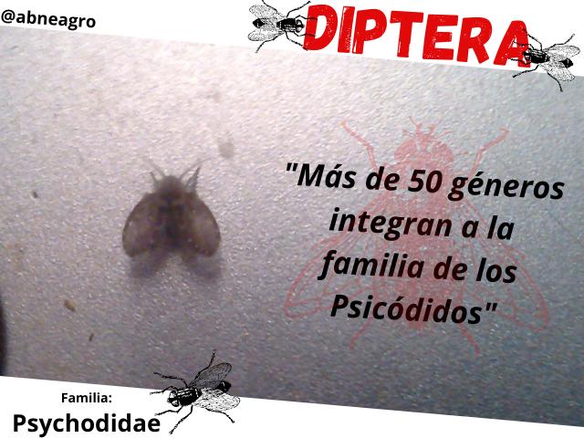Diptera 1.png