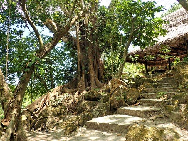 tree rock.jpg
