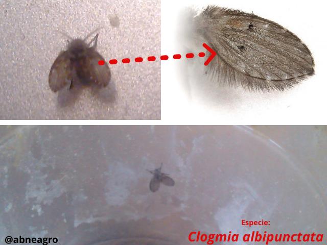 Diptera 8.png