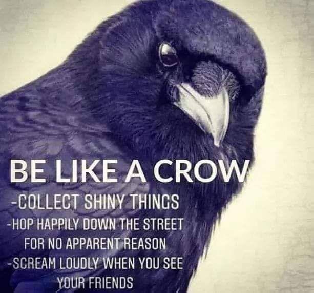 like-a-crow.jpg