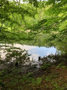 Główny Szlak Beskidzki - Etap 4:  Cisna- Duszatyn