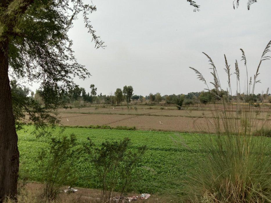 green field #20