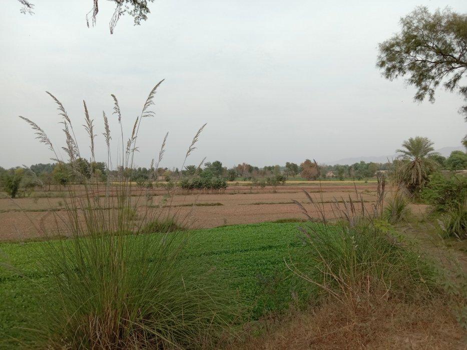 green field #21