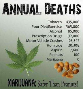 pot-facts2.jpg