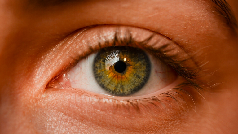 50 new genes for eye colour