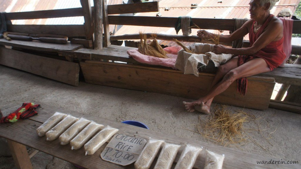 An Ifugao man manually separating the grains and selling their produce from the rice terraces
