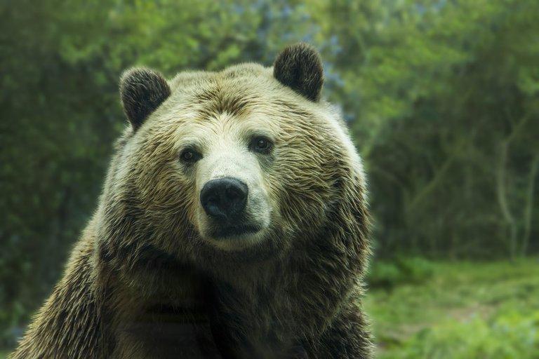 bear-1245807_1280.jpg