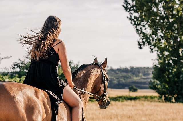 horse-3553269_640.jpg