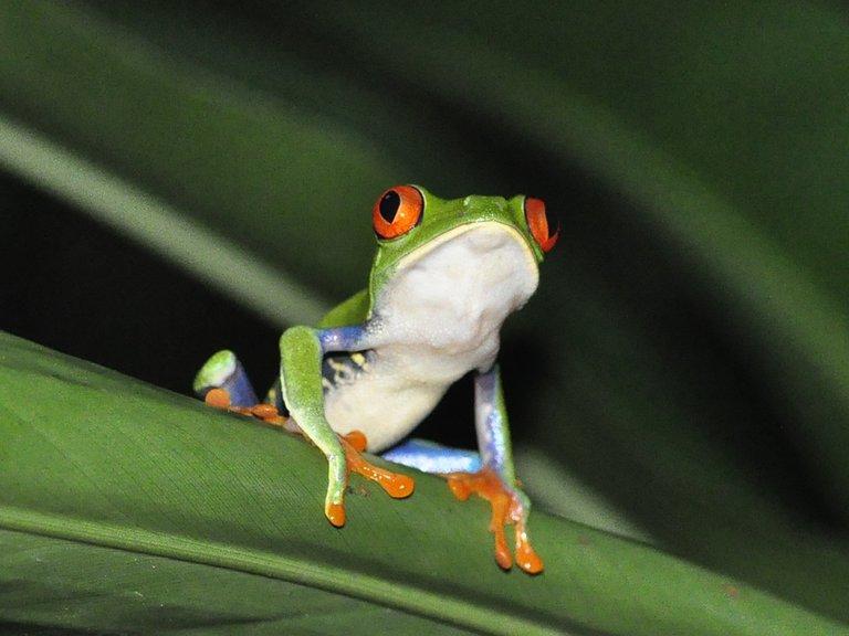 frog-1434425_1280.jpg