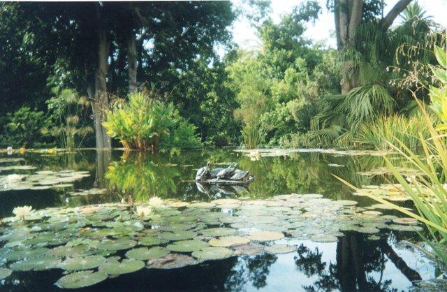 Jardín Botánico nenúfares.jpg