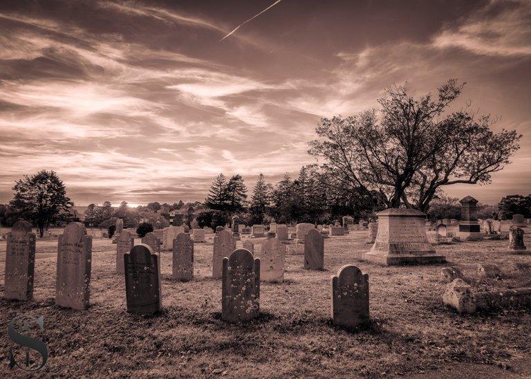 WW Evening walks in Cemetery_4.jpg