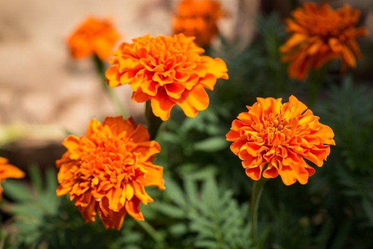 orange flower 1-1.jpg
