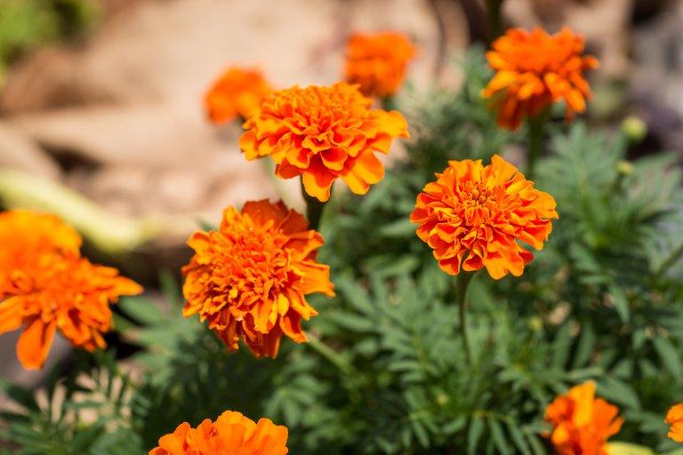 orange flower 2-1.jpg