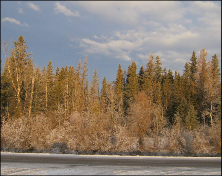 early morning light and light hoar frost scene at end of road some frosted highway.JPG