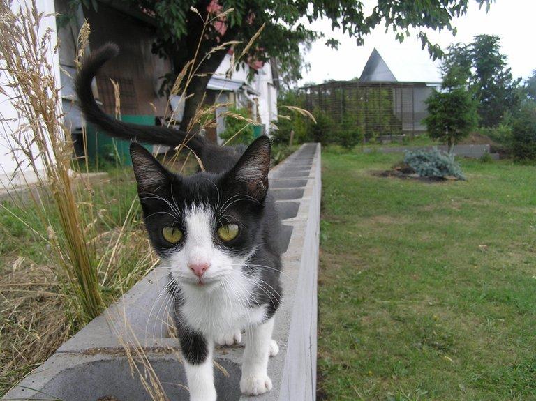 cat.2.jpg