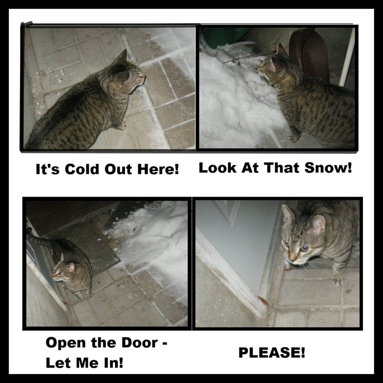 4 pictures of JJ out in cold in courtyard by door.jpg