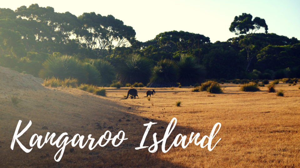 Kangaroo Island.png