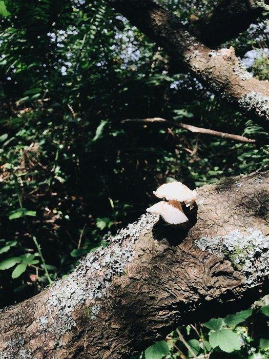 JPEG image-6DCE7F4411E8-22.jpeg